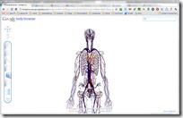Body Browser - Google Labs - Google Chrome 16.12.2010 102805
